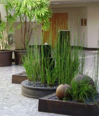 Intretinere lunara plante de interior