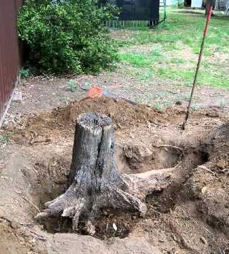 Extragere buturugi si cioturi de arbori (pomi/ copaci)