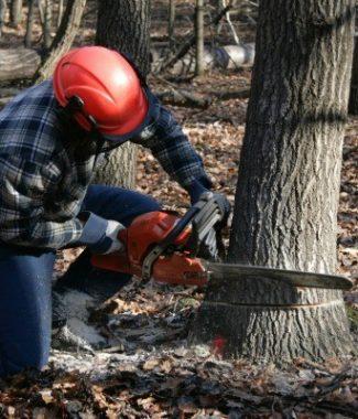 Doborari arbori