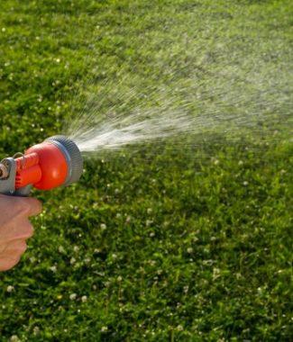 Udare plante si gazon