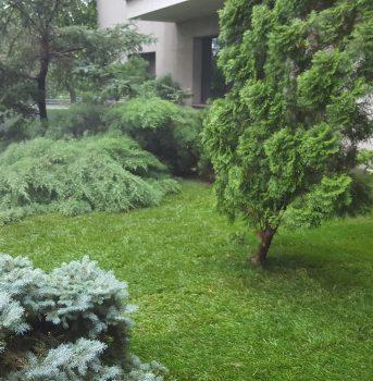 Amenajare spatiu verde